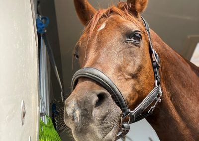 Forageplus Horse